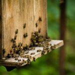 Wie geht man mit Bienenraub um?