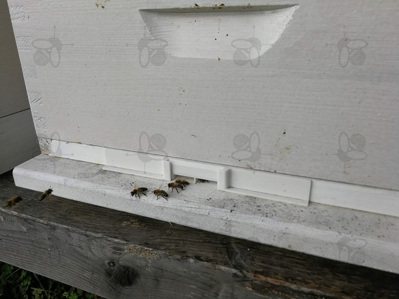 Bienenraub - Lösung kleinerer Eingang